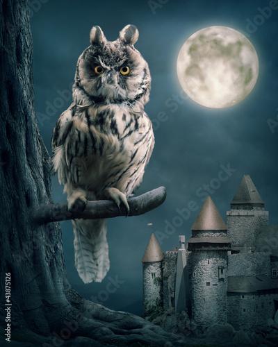 Fotobehang Volle maan Owl