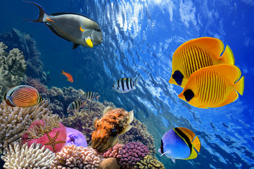 Obraz na SzkleUnderwater world