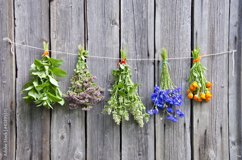 Fototapeta deski  various-medical-herbs-on-wooden-wall