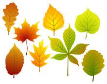 Set Of Fall Leaves