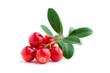 canvas print picture - Lingonberries