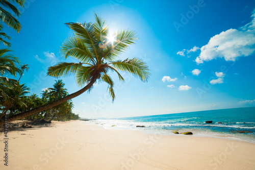 Tuinposter Palm boom Tropical beach