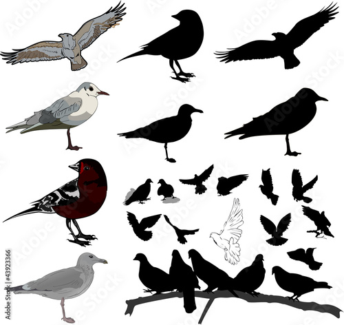 Photo Set of birds and silhouettes of birds