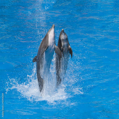Photo Stands Dolphins Dauphine dansant sur l'eau