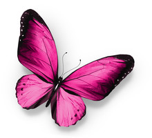 Pink Butterfly , Isolated On W...