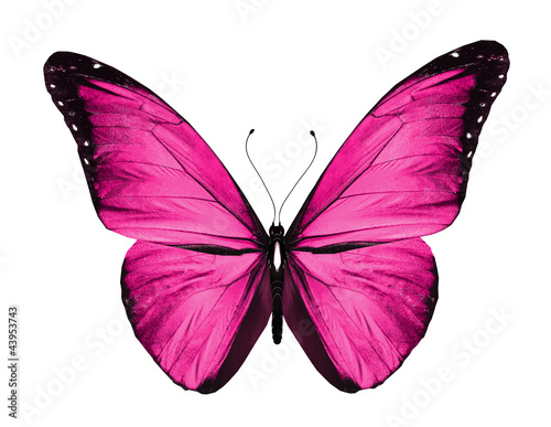 Fotografie, Obraz  Pink butterfly, isolated on white