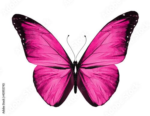Valokuvatapetti Pink butterfly, isolated on white
