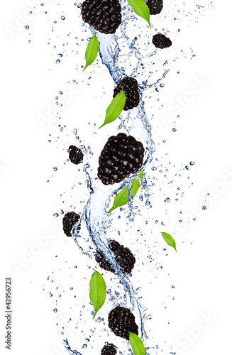 Foto op Canvas In het ijs Fresh blackberries falling in water splash
