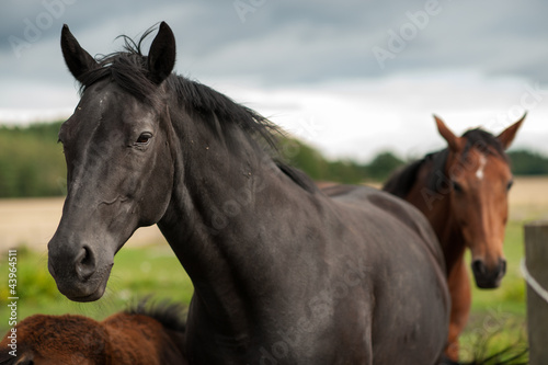 Black horse in the Swedish countryside