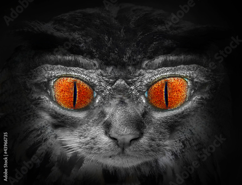 dziki-kot-z-czerwonymi-oczami