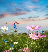 Butterflies Flying In The Flow...