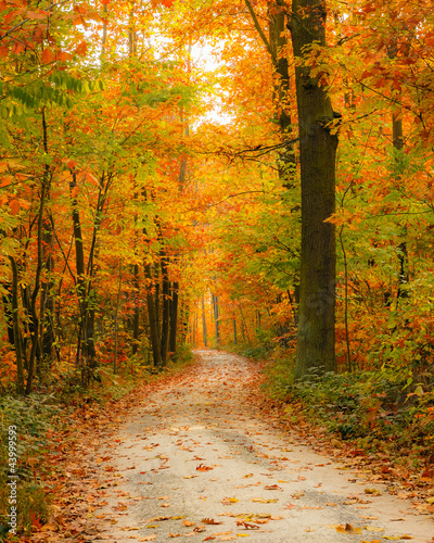 Photo Stands Road in forest Pathway in the autumn forest