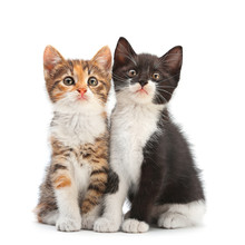 Two Kitten Sitting