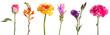 canvas print picture - Schnittblumen