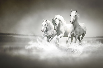 FototapetaHerd of white horses running through water