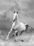 white horse in sunset - 44041957