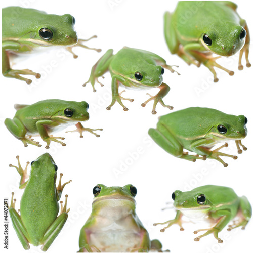 Fotografie, Obraz  Green Frog Collage