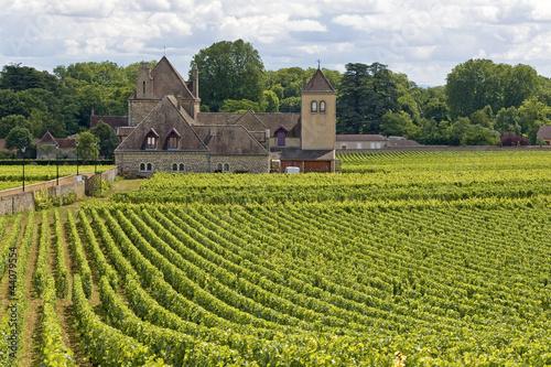 Papiers peints Vignoble Vineyard in Bourgogne, cote de Nuits. France