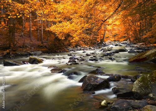 Poster Rivière de la forêt Autumn landscape with trees and river
