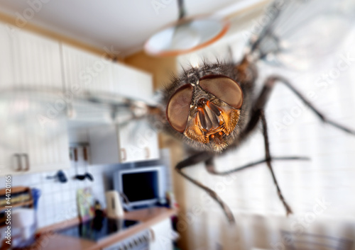 housefly Canvas-taulu