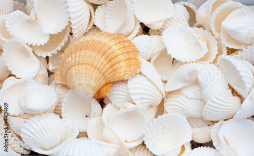 Poster Coquillage seashells