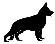 Deutscher Schäferhund Stehend...