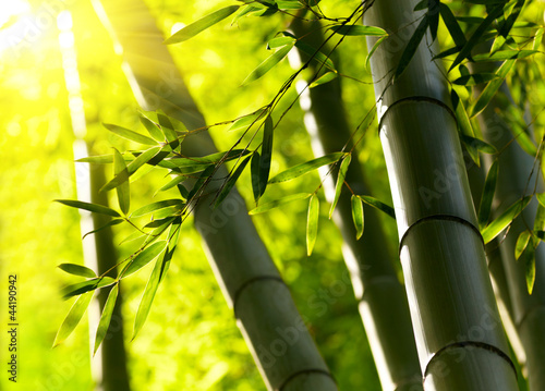 Foto op Plexiglas Bamboe Bamboo forest background. Shallow DOF