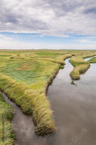 Spoed Foto op Canvas Noordzee Küstenschutz - Salzwiesen an der Nordsee