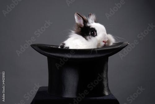 Kaninchen im Zylinder Canvas-taulu