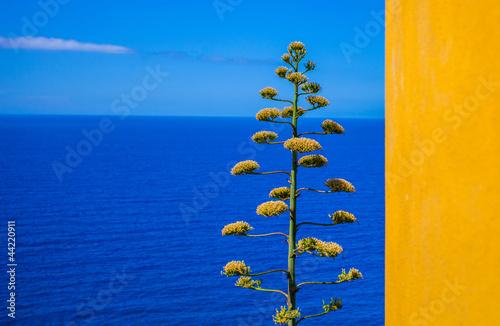 Foto auf Acrylglas Ligurien Wall and The Sea