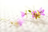 Fototapeta Kwiaty - fioletowe kwiaty