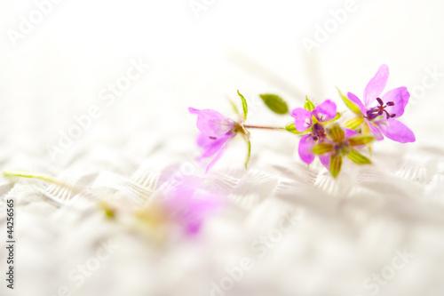 Fototapeta fioletowe kwiaty obraz