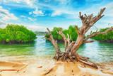 Tropikalna wyspa - 44256713