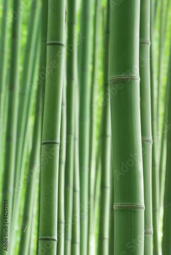 Foto op Canvas Bamboo 緑の竹林