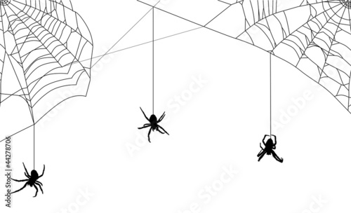 three spiders in black web on white Canvas