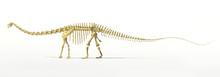 Diplodocus Dinosaur Full Skele...