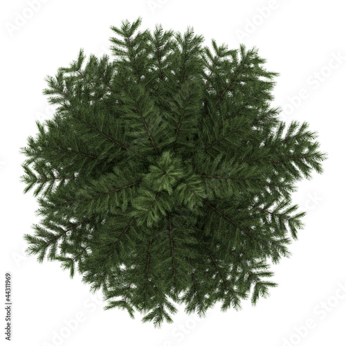 Fotografia, Obraz  top view of scots pine tree isolated on white background