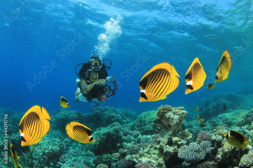 Poster Coral reefs Fish, Coral Reef and Scuba Diver in ocean