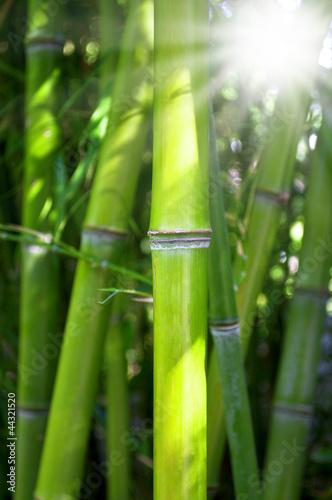 Foto-Kissen - Bambus mit Sonnenschein
