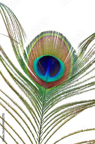 Foto op Plexiglas Pauw peacock feather