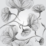 Wild dog rose / Seamless black-and-white pattern