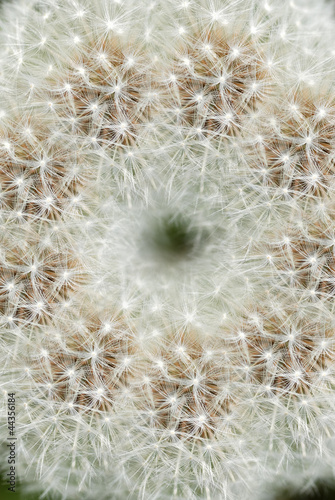 Canvas Prints Dandelions and water わた毛