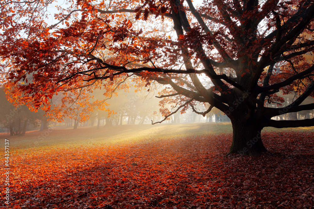 Alone tree in Autumn park.