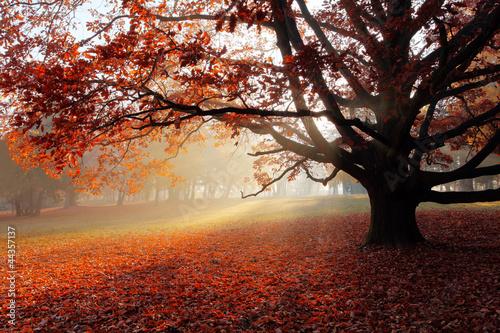 Foto op Canvas Herfst Alone tree in Autumn park.