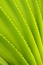 Abstract Background Texture Of Tropical Plant