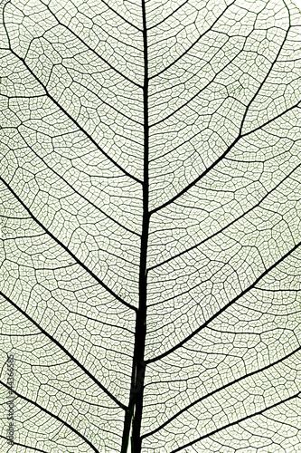 lisc-drzewa-z-bliska