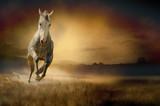 Jasny koń w galopie na tle zachodzącego słońca