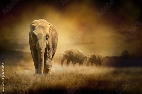 Elephants at sunset Wallpaper Mural