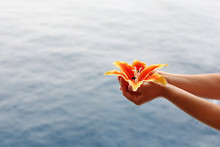 Woman Hands Hold Artificial Orange Lily At Background Of Sea
