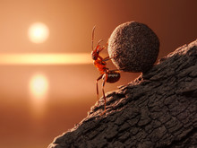 Ant Sisyphus Rolls Stone Uphil...